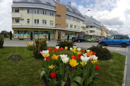 Dolina_Cisow