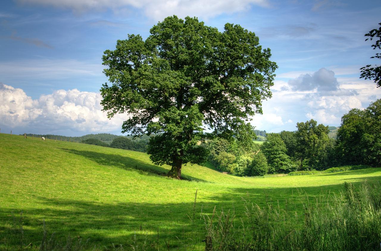 tree 402953 1280